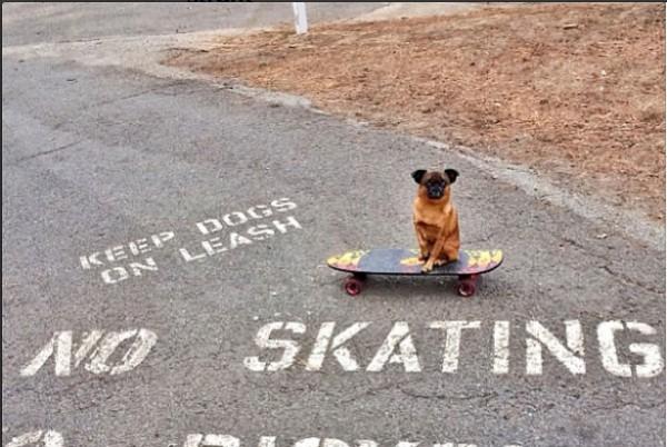 STRGHT Skateboards