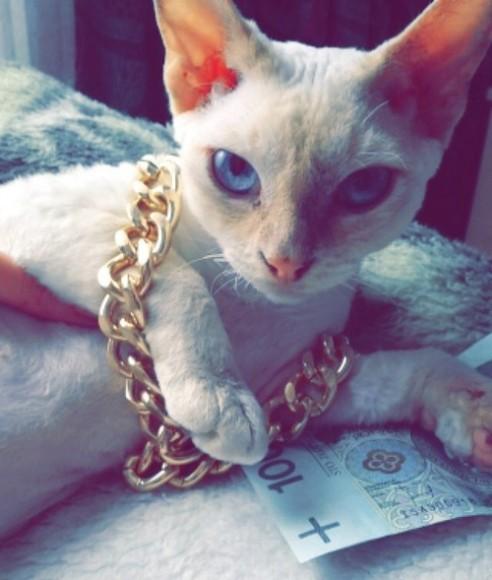 Cashcatz4